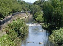 多自然型川づくり(イタチ川)